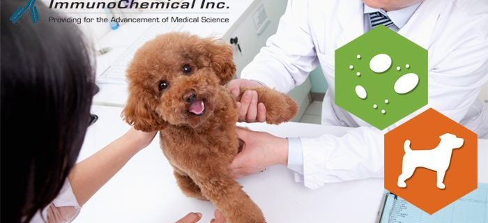 Canine C-reactive Protein (cCRP): biomarker for systemic inflammation and tissue damage, particularly in neoplastic and immune-mediated diseases.