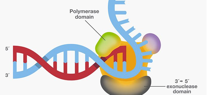 SmarTaq DNA Polymerase: for highly specific PCR, multiplex PCR and high sensitivity applications.