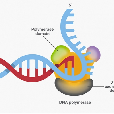 SmarTaq DNA Polymerase: for highly specific PCR, multiplex PCR and high sensitivity applications.SmarTaq DNA Polymerase: for highly specific PCR, multiplex PCR and high sensitivity applications.